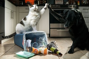 pet-friendly cleaning services